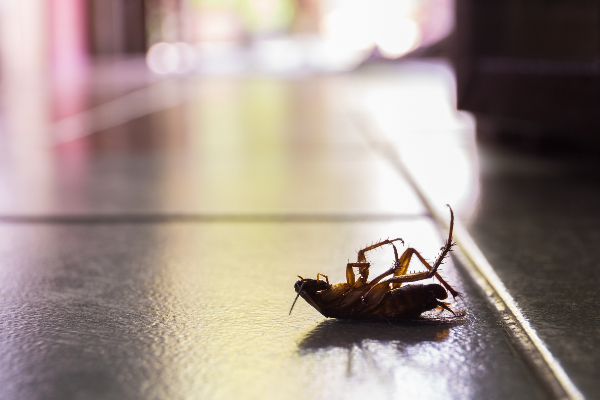 Cockroach Control, Pest Control in Stockley Park, UB11. Call Now 020 8166 9746